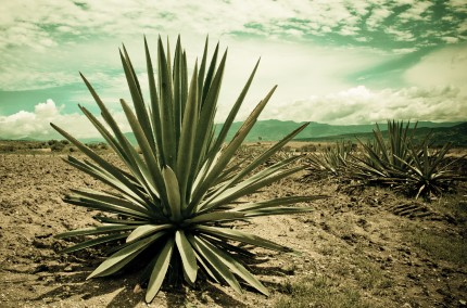 Taste and Drink Experience Tequila e Mezcal by Rossi & Rossi